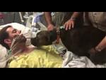 Душераздирающее прощание собаки со своим хозяином  (видео)